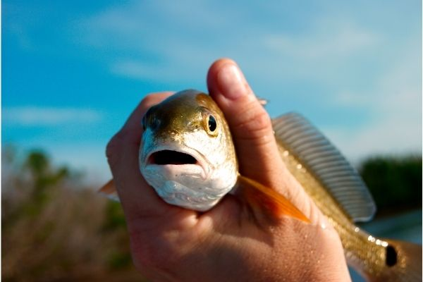 Best Fishing Seasons Hilton Head